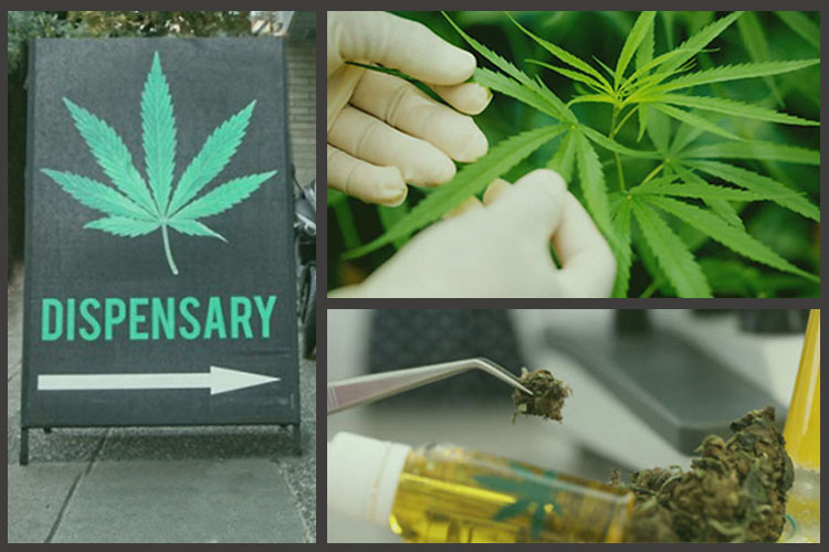 Sectors in Cannabis Industries